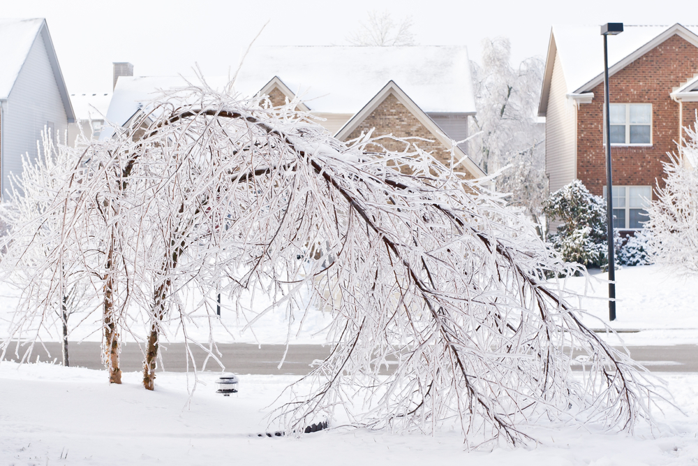 tree after ice storm