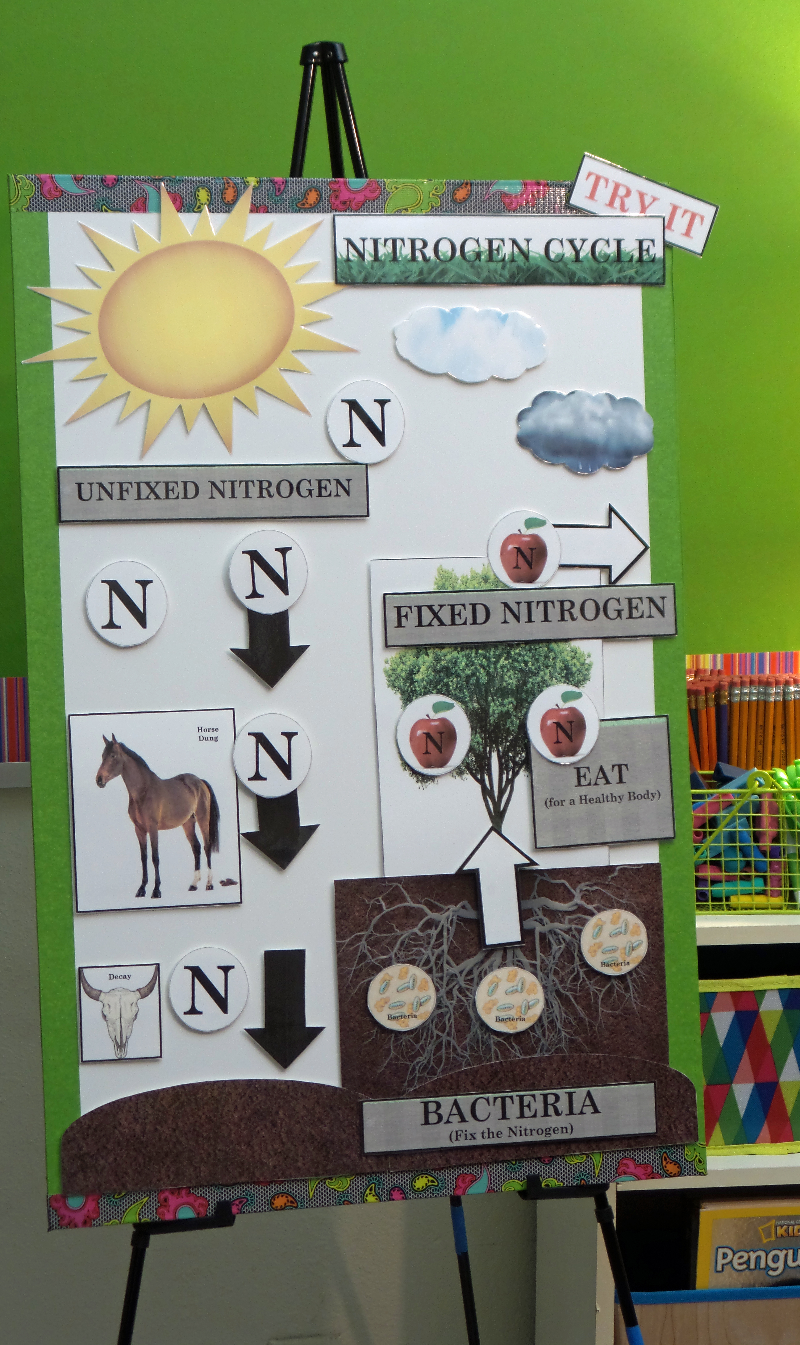 Active Anchor Chart Nitrogen Cycle