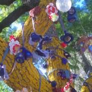 Venerated Pine Street Jacaranda From Below