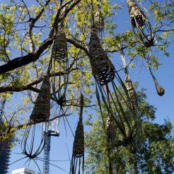 Ed &Charlottes Tree, daytime