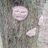 Tree Adornments