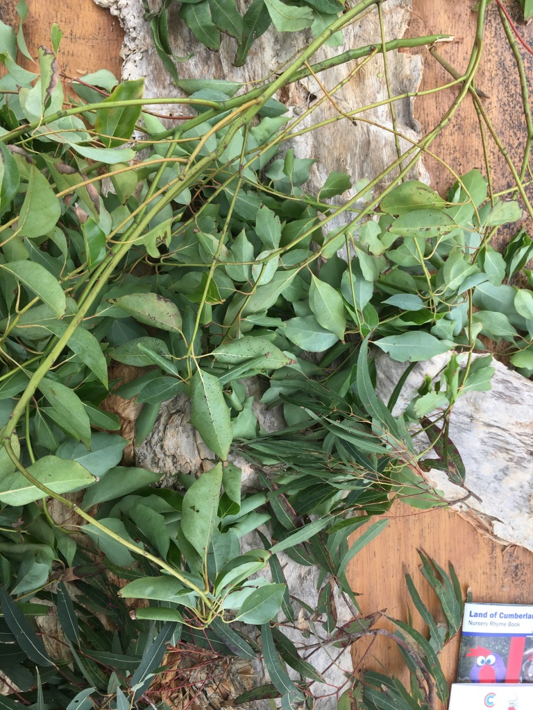 Paperbark and Bay leaves