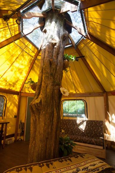 Tree growing through the center of an Aurora treehouse