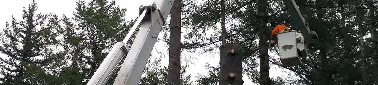 Tree Removal, tree stump art