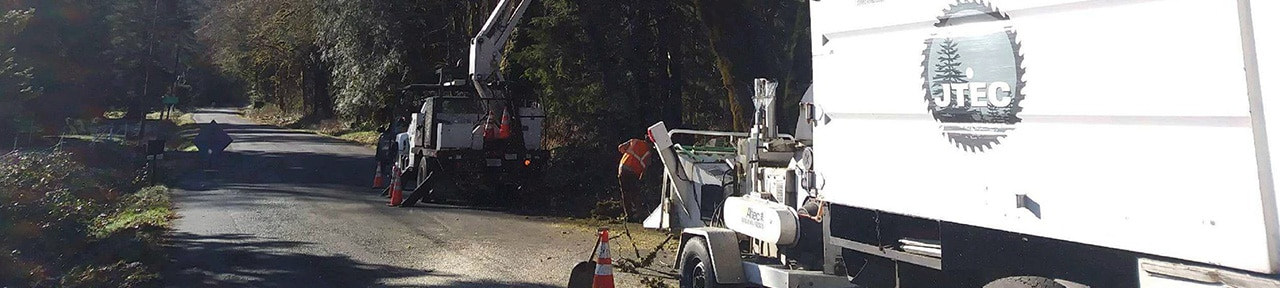 Storm Clean-Up, emergency tree removal, 24-hour emergency service