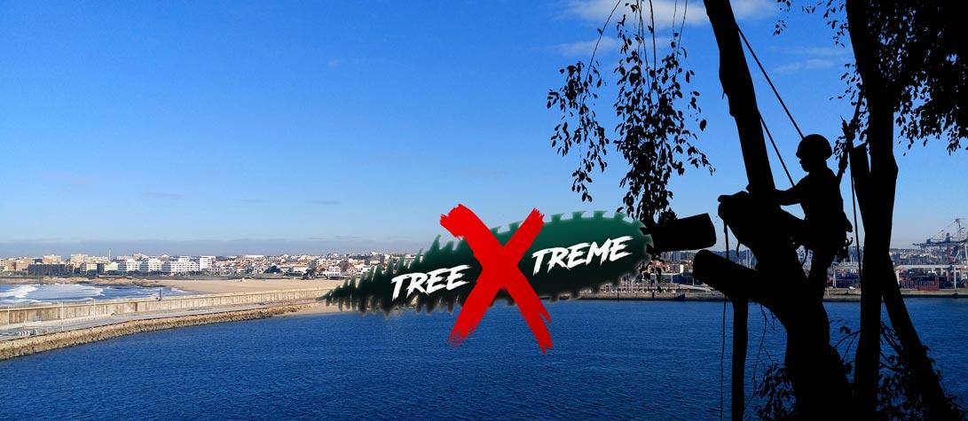 Baumpflege Bremen | treeXtreme Baumkletterer Bremen