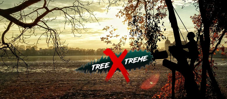 Baumpflege Dresden | treeXtreme Baumkletterer Dresden