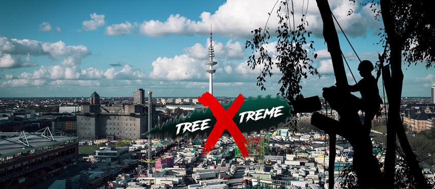 Baumpflege Hamburg | treeXtreme Baumkletterer Hamburg