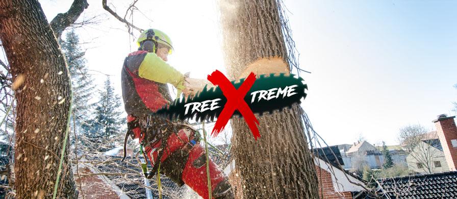 Baumpflege anbieten | treeXtreme Baumkletterer