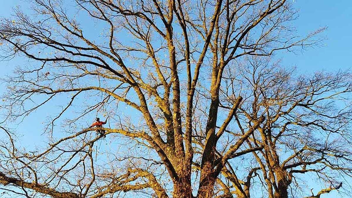 Baumpflege-Rudow