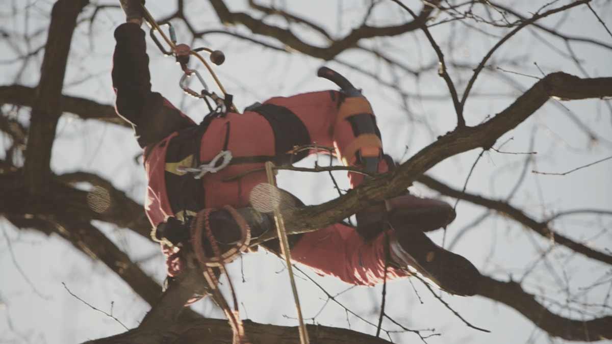 Baumpflege-Teltow