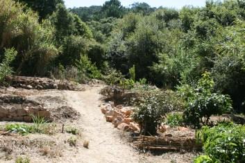 Camino das Fadas, Emerging food forest, Terra Alta, Portugal, 2014