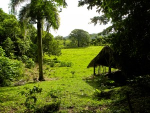 Great view of the tropical landscape of Taino Farm, chicken coop under the shade of the large jungle trees and palm trees