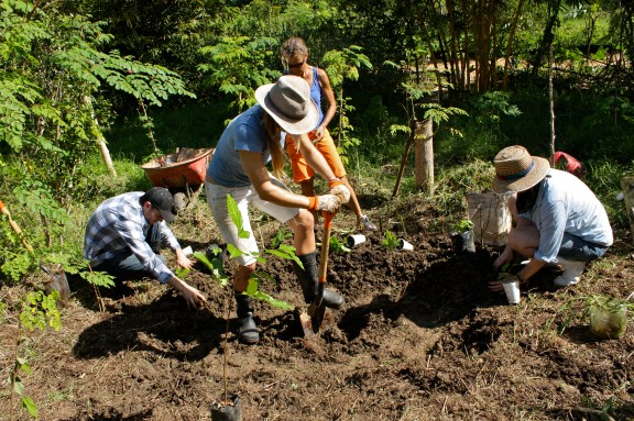 Terrace tree Planting at Taino Farm