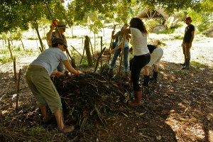 Hot compost Pile turning in the heat of the tropical day but in the shade.