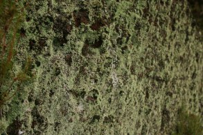 highland mosses showing humidity