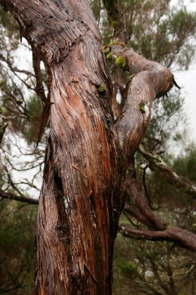 highland vegetation
