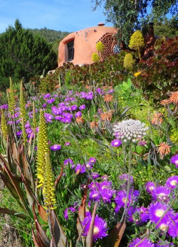 Springtime beauty in Casita Verde 2014