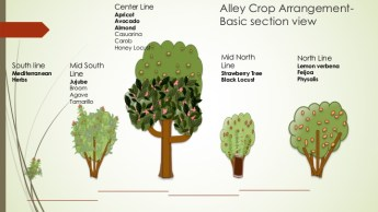 alley cropping schematic