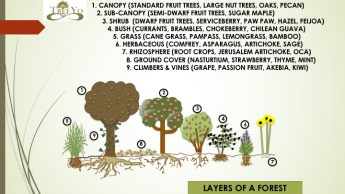 food forest, the main concept of blending this with alley cropping for the design
