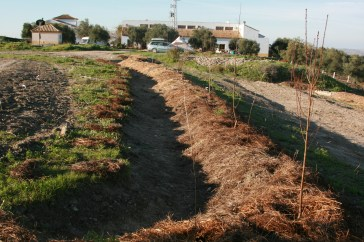 Upper swale finished off, trees on mound and before the cut herbs and trees