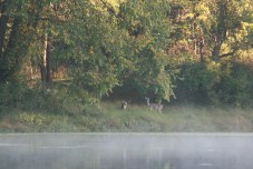 deer lakeside