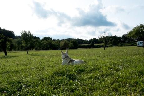 our dog captain, photo by Leigh Vukov