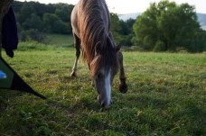 our free range horse, lol, photo by Fergus Padel