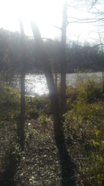 clearing reveals the lake and planting spots