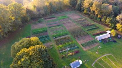 Dark Wood Farm, Fall 2017