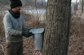 Michael Beck placing the final hat on the maple tapping buckets