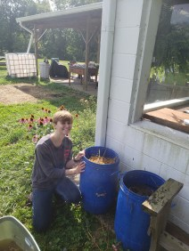 Trystin adding to worm bins