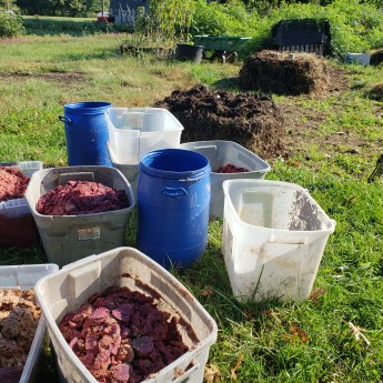 beet kvass wastes staged with varying aged piles in background
