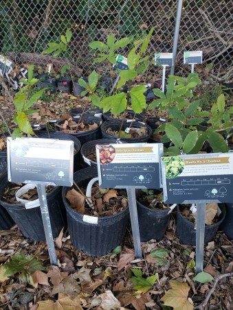 Nursery plants at Cincinnati Permaculture Insitute Growing Value Nursery in Northside with new signage, 2018