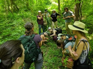 Paw Paw Paradise Propagation and Advanced Foraging Adventure with
