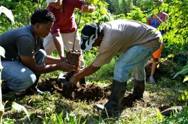 The farm crew planting a Rhambutan tree to show how its done in hands on