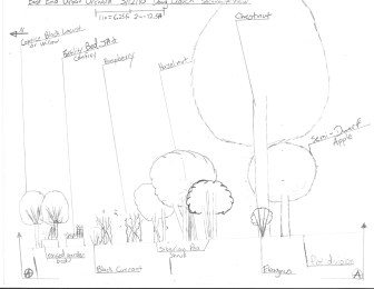 Urban Orchard Proposal that is slowly been reformed and implemented