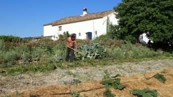 Doug doing chop and drop in the organic garden