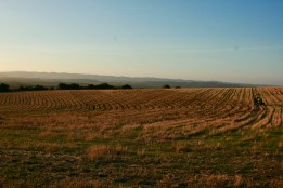 the wheat field getting a new name, alley cropping key line operation, Suryalila, Southern Spain