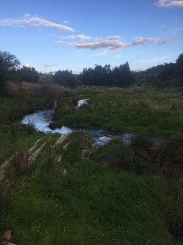 aquatic habitat