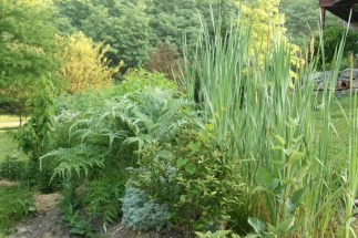 Swale raised mound planted in humid temperate climate