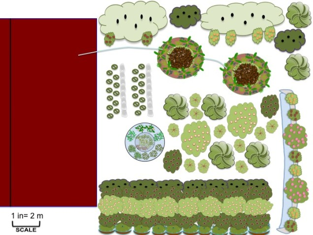 Banana Circle serving as a greywater system as part of an overall design with aquaculture, swale, hedgerows, and garden terraces
