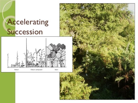 Accelerate Succession and Evolution