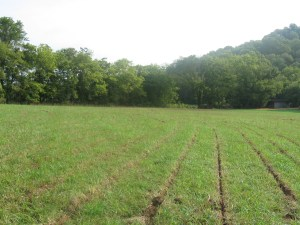 The gentle slopes of a worn out hay field in Tennessee where we plowed in 2009.
