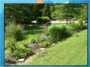 Permaculture Swale summer