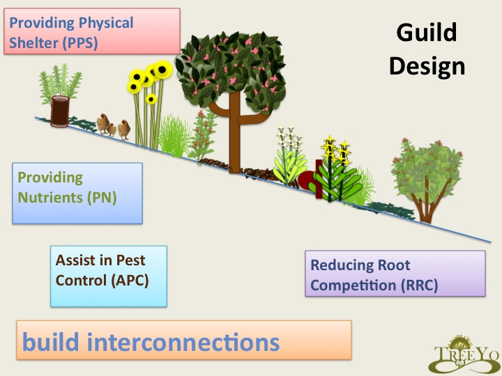 Chop and drop of trees and biomass plants - A Permaculture Design Course Handbook