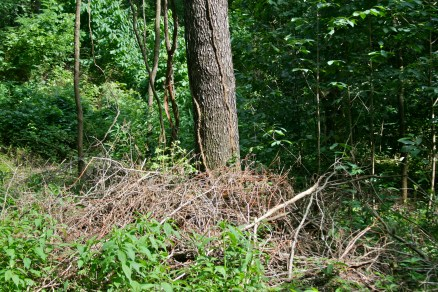 brush pile made from chop and drop