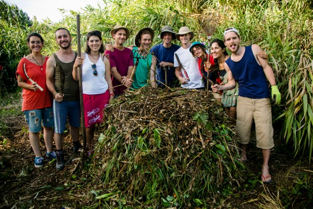 Compost group photo of , at least 1 cubic meter, Photo credit Alice Smeets: http://www.alicesmeets.com