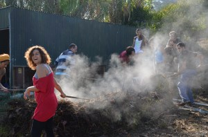 Steam from the hot compost
