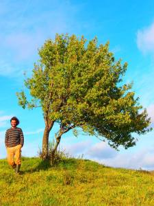 tree flagging on the Pear tree in Southern Portugal and the authors hair